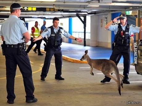 Полиция Австралии