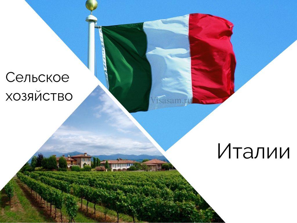 Отрасли специализации сельского хозяйства Италии