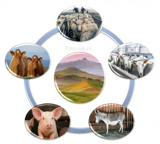 Отрасль животноводства Италии