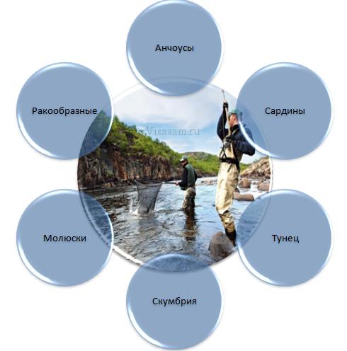 Отрасль рыболовства Италии
