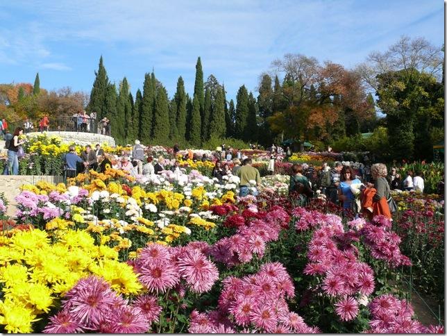 Никитский Ботанический Сад. Бал Хризантем