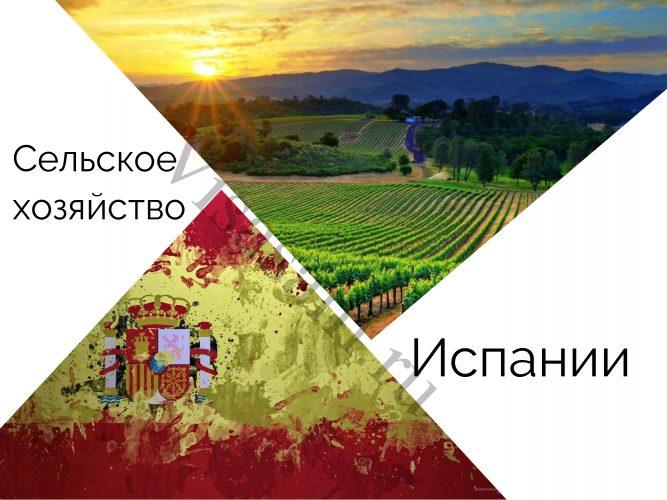 Сельское хозяйство Испании