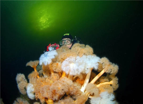 дайвинг Белого моря
