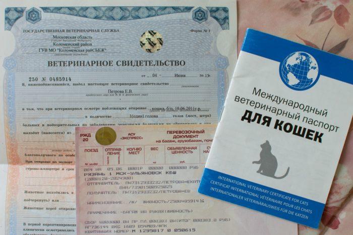 Документы для провоза кошки