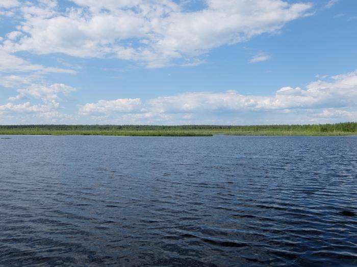 Даниловское болото