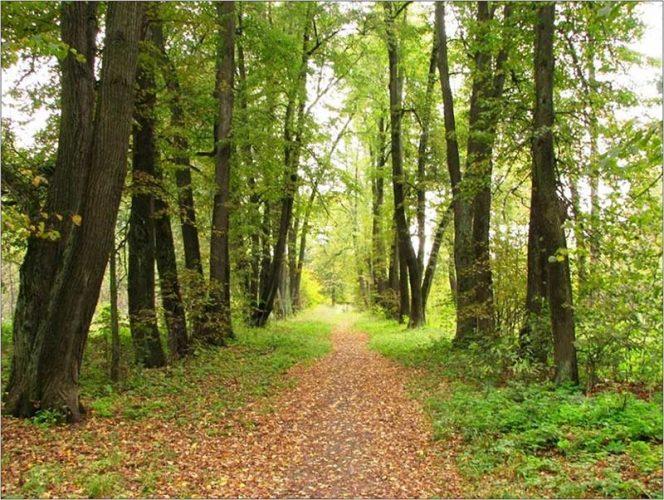 Дендрологический парк «Волхонка»