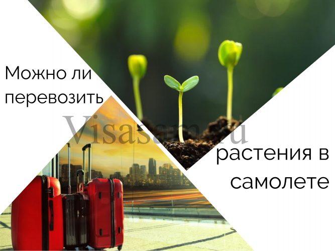 Перевозка растений самолетом : можно ли провозить семена и цветы в горшках
