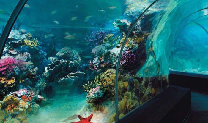 Sochi Discovery World