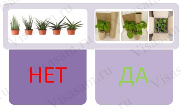 Упаковка растений