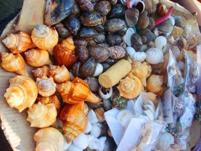Абхазские ракушки