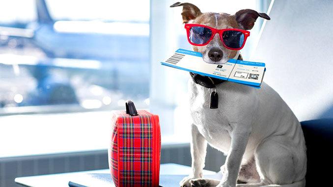 Правила провоза животных в салоне самолета