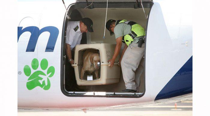 транспортировка собаки в багажный отсек