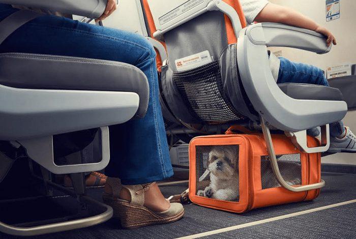 Переноска в салоне самолета