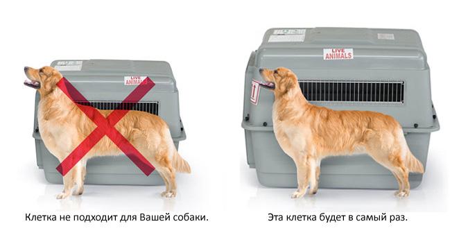 Размеры контейнера для транспортировки собаки