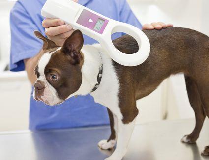 Сканирование микрочипа животного