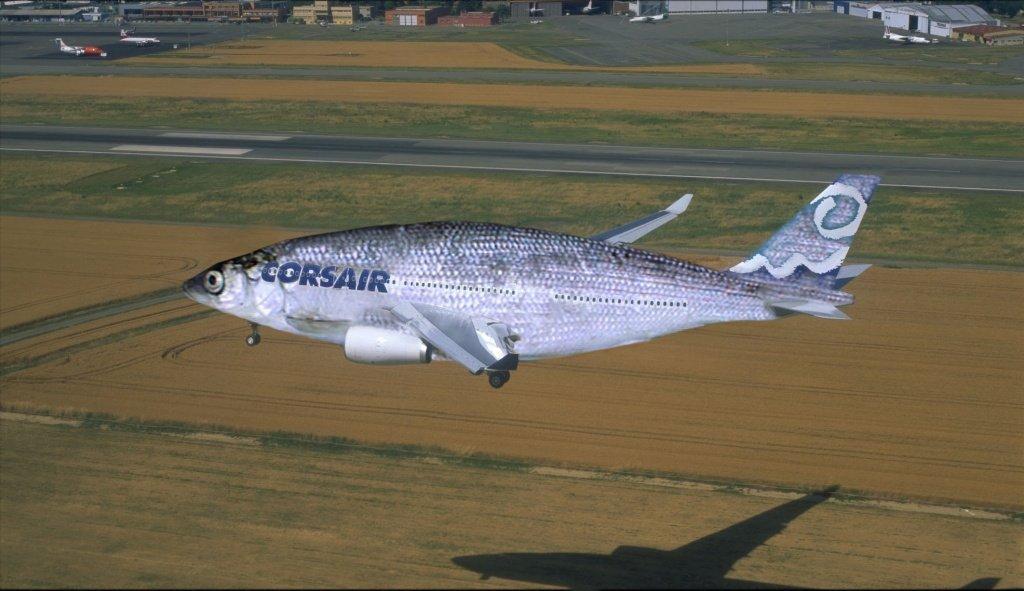 Можно ли провозить рыбу в ручной клади и багаже самолета