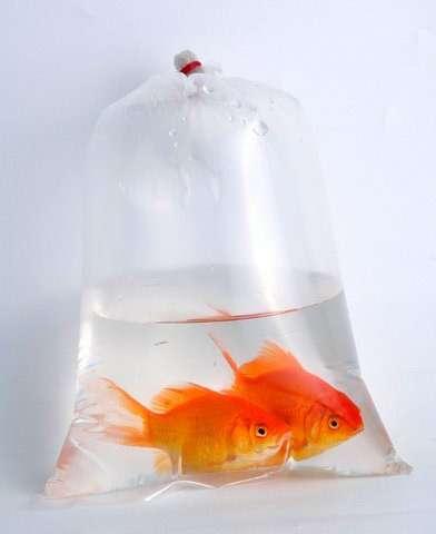 Транспортировка аквариумных рыб