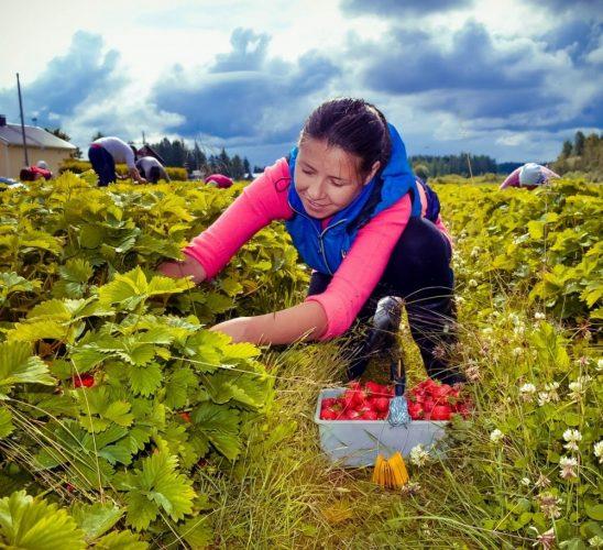 Швеция: сезонная работа