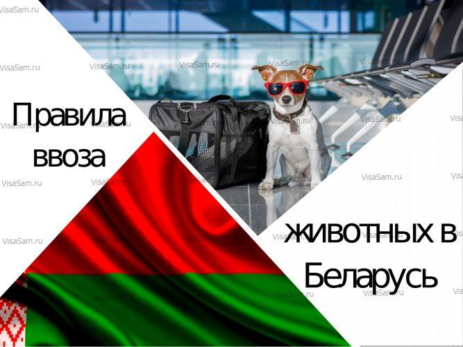 Ввоз животных в Беларусь