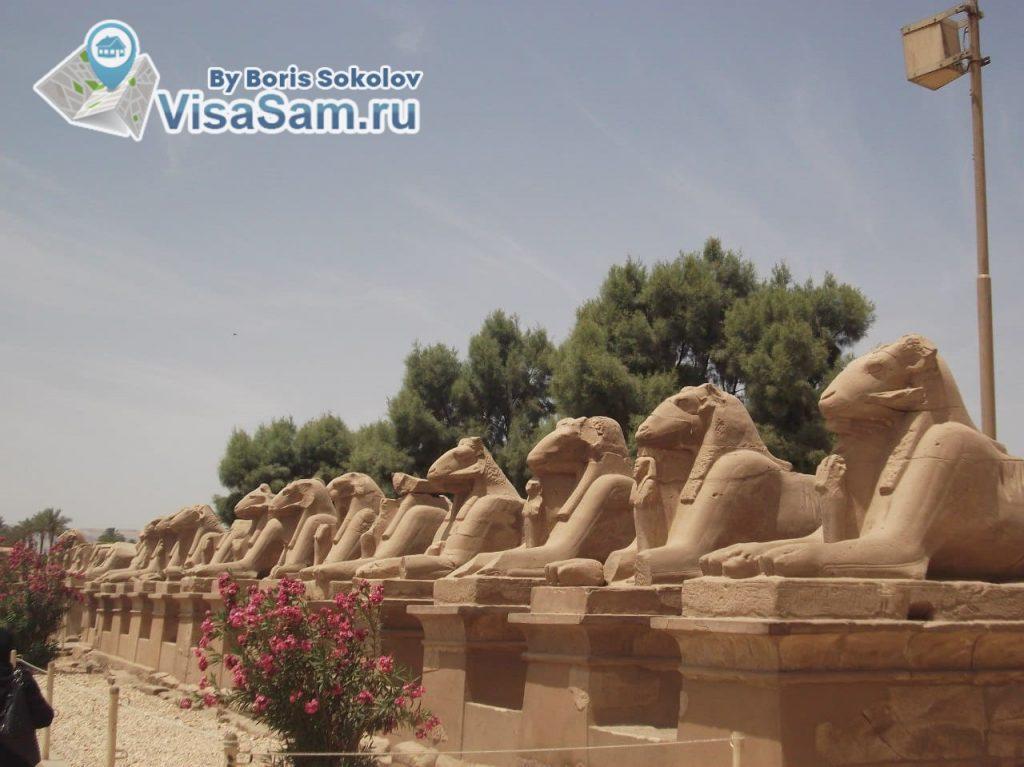 ПЦР-тест на коронавирус для поездки в Египет