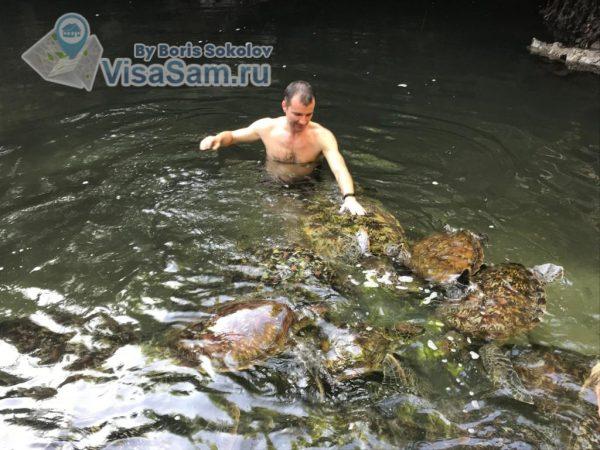 аквариум с черепахами в Нунгви