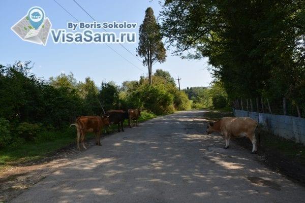 Местный колорит Абхазии